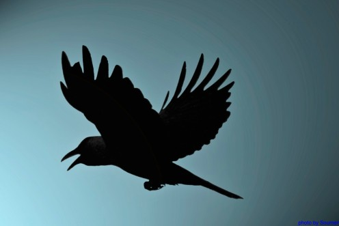 Crows flying to the light. May be used as conceptual idea.